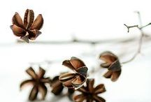 graines / seed pods / photographies ou représentations, dessins de graines en tout genre seed photographs, drawings