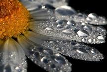 Blumen ~ und Pflanzen ~ meer / Tolle #Fotos von #Blumen, #Pflanzen und #Sträuchern. Ihr #GalaBau in #Jüchen www.ericclassen.de