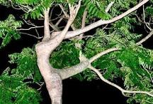 Mein Freund der Baum... / Mein Freund der #Baum - ihr #Gartenbauarchtitekt in #Jüchen www.ericclassen.de