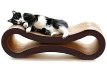 animal house / design for cool cats + delightful doggies.  / by heseon park
