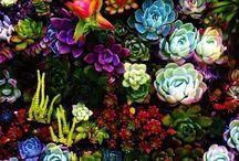 Garden inspiration / Garden