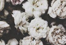Flower Power / by Ellen Hutchinson