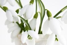 favorite flowers / by Laura Bryan