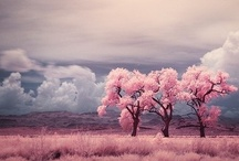 springtime / by Laura Bryan