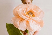 bloom / by Ellen Hutchinson
