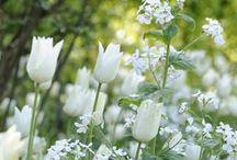 Flower Gardening / Flower bomb.