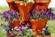 Gardening with Terra Cotta Pots / Terracotta pot gardening at its finest.  You can paint it, plant it, use it indoors or out, a beautiful way to accessorize your plants.