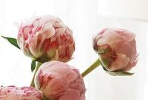 ∆ flowers ∆ / flowers // floral // botanical // plants // etc.  / by regan's brain