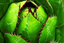 Cactus!!!!!!! / by Judith Lopez