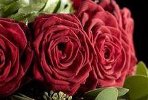 Ramos de San Valentín | Bourguignon Floristas / En Bourguignon trabajamos con rosas Red Naomi. Su olor, su durabilida, la textura aterciopelada de sus pétalos, su tamaño y su perfecto color rojo intenso la convierten en la reina de las rosas. Visita nuestra web www.bourguignonfloristas.es o haz tu pedido para San Valentín llamando al teléfono 91 457 36 47.