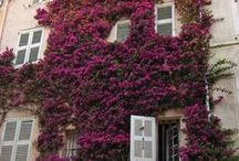 pinkmoss flowers