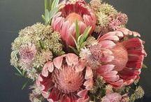 Desde el taller | Bourguignon Floristas / Queremos compartir con vosotros nuestra pasión por las flores a través de imágenes del día a día en el taller de nuestra tienda. Esperamos que disfrutéis tanto como nosotros!