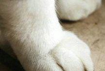 Animals / by Jennifer
