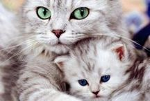 Cat Collection / by Cris