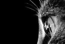 Black & White / by Cris