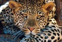 """Amazing Animals / """"An animal's eyes have the power to speak a great language.""""~Martin Buber  / by Cris"""