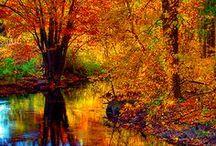 Autumn / by Cris