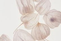 Doux Couleur / by Mii