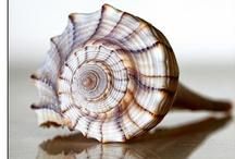 Sea shells / by Monisha Sharma