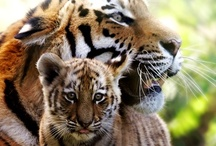 Animals/Birds and their young ones / by Monisha Sharma