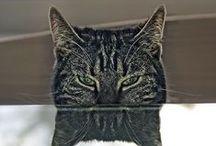 BlickeDeeler • Cats ARE Creative / Unsere eigensinnigen Begleiter, die uns doch schon manches Schmunzeln auf's Gesicht gezaubert haben. Natürlich auch bei uns in der Agentur anzutreffen >>> www.BlickeDeeler.de / by BlickeDeeler Werbeagentur