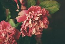 Bloom / by Bikini Thief