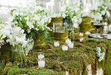 Dream Flowers / by Tammy Maltby /www.tammymaltby.com