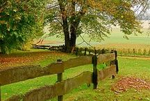 Garden Fences / by LaurieAnna's Vintage Home