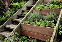 Garden Ideas / Smart gardening - tips and tricks. Organic gardening, composting, growing veggies, preparation for garden season, harvest time. Growing tomatoes, cucumbers. Plants that grow together charts.