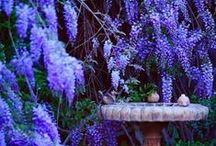 inspiration color - purple / by Marissa Webb