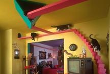 =^.^= Kitty Dream House =^.^= / by Michele McKenzie Bobbitt