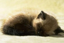 =^.^= Just a little cat nap =^.^= / by Michele McKenzie Bobbitt