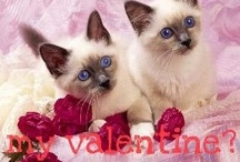 =^.^= Cats Love Valentines Day =^.^= / by Michele McKenzie Bobbitt