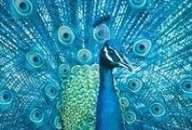Peacock Blue / Our latest crush.  / by oomph online