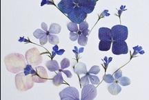 flora / by Rebekah Nathan