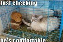 Funny! / by Liz CrochetingDoc