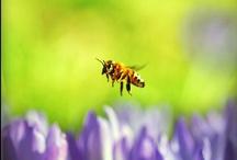 Bees / by Loh Hon Chun