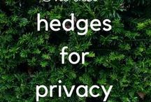 Garden privacy ideas / Garden privacy ideas, garden privacy screens, garden privacy trellis, garden privacy trees, small garden privacy and garden privacy hedges
