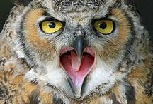 """OWLS ♥ I LOVE OWLS / """"A wise old owl sat on an oak; The more he saw the less he spoke; The less he spoke the more he heard; Why aren't we like that wise old bird?"""""""