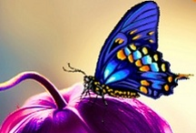 """Butterflies >!< Butterfly House / """"The caterpillar does all the work, but the butterfly gets all the publicity.""""  ― George Carlin"""