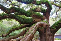 Trees ♥ Trees ♥ Trees / Trees are your best antiques.  ~Alexander Smith