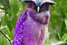 Purple ♥ My Favorite Color ~♥~ / by Vicki Megenity Jones ☮ ♥ ☮ ♥ ☮☮ ♥ ☮ ♥ ☮☮ ♥ ☮ ♥ ☮☮ ♥ ☮ ♥ ☮