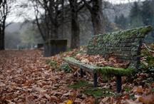 Abandoned / by Lynn Waddell