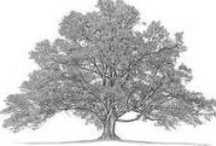 Trees / by Melanie A Grout