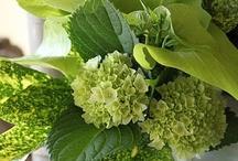 Green * Gardens 101 / Gardening, composting, sustainable gardening,