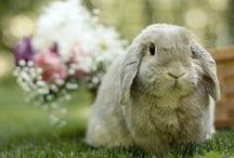 Easter Brunch / by Roaman's