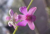 Orquídeas / Déjate maravillar por los colores, formas y texturas de nuestras orquídeas.