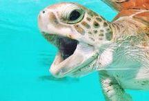 Tortugas Marinas / Somos amantes de las tortugas marinas, trabajamos todos los días en su protección y conservación.