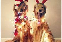 Christmas Decor / by Roaman's
