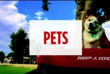 Pets / Pets love Radio Flyer toys too!